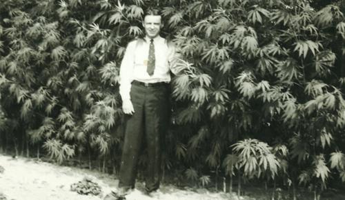 marihuana-history