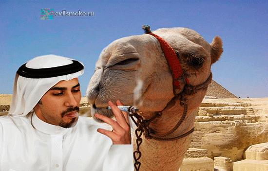 foto-kurenie-v-egipte