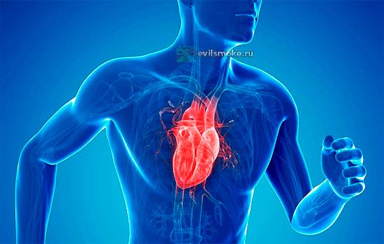 Фото - Сердце в груди